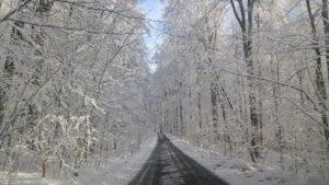 glaswald im winter